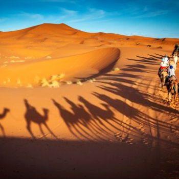morning camel safari